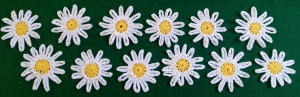 Blocked Daisies